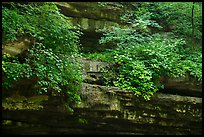Limestone ledges with summer wildflowers. Mammoth Cave National Park ( color)