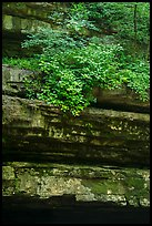 Limestone ledges and summer blooms. Mammoth Cave National Park ( color)