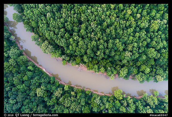Aerial view of Green River and forest looking down. Mammoth Cave National Park (color)