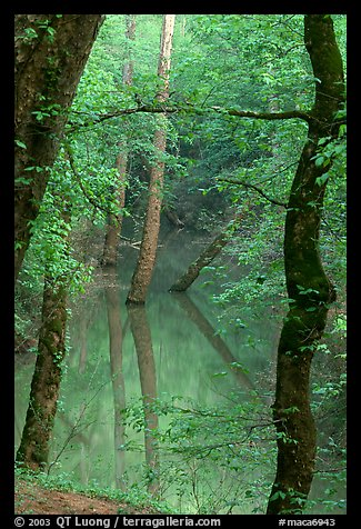 Trees reflected in green water of Echo River Spring. Mammoth Cave National Park (color)
