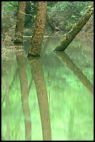 Trees and reflections in green waters of Echo River Spring. Mammoth Cave National Park ( color)
