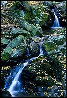 Cascades of the Hogcamp Branch of the Rose River with fallen leaves. Shenandoah National Park, Virginia, USA. (color)