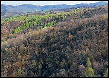 Hillside with bare trees and trees in early spring foliage. Shenandoah National Park ( color)