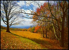 Meadow Overlook in fall. Shenandoah National Park ( color)