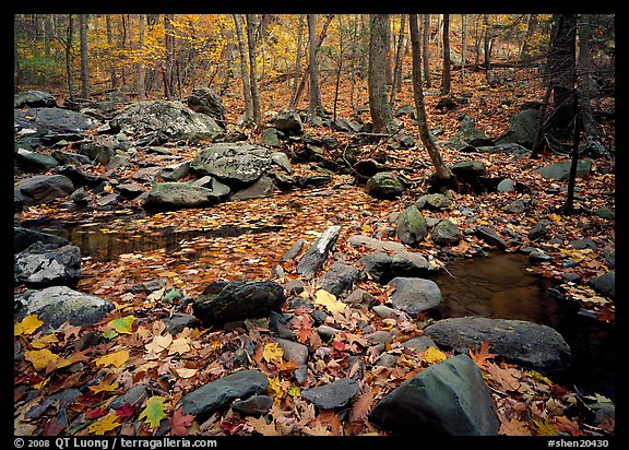 Forest floor, boulders, and trees in fall. Shenandoah National Park (color)