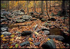 Forest floor, boulders, and trees in fall. Shenandoah National Park ( color)