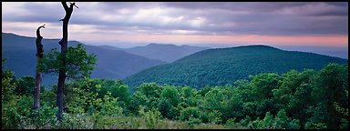 Hillside, forest and ridges in early summer. Shenandoah National Park (Panoramic color)