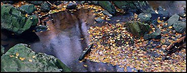 Autumn close-up of pond with fallen leaves and rocks. Shenandoah National Park (Panoramic color)