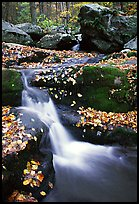 Creek and mossy boulders in fall with fallen leaves. Shenandoah National Park ( color)
