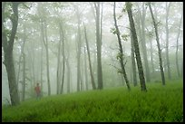 Visitor looking, misty forest. Shenandoah National Park ( color)