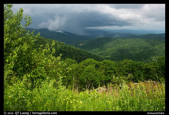 Wildflowers and hills from Duck Hollow Overlook. Shenandoah National Park (color)