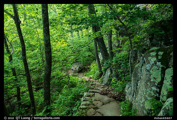 Whiteoak Canyon Trail. Shenandoah National Park (color)