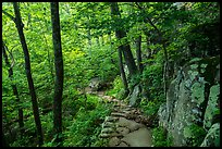 Whiteoak Canyon Trail. Shenandoah National Park ( color)