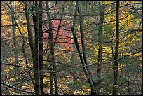 Tree trunks and branches against a backdrop of fall colors. Shenandoah National Park ( color)