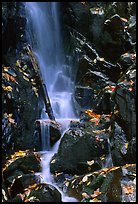 Cascade with fallen leaves. Shenandoah National Park ( color)