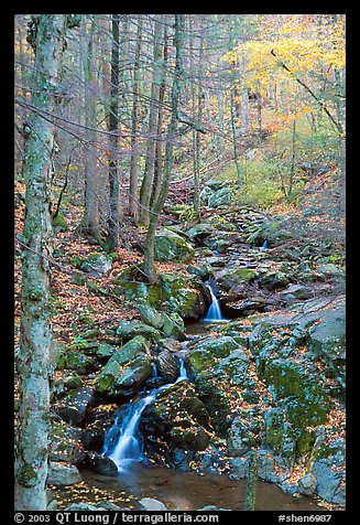 Cascades in fall, Hogcamp Branch of the Rose River. Shenandoah National Park, Virginia, USA.