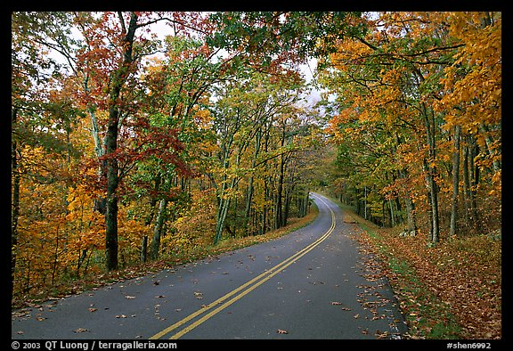 Skyline Drive in autumn. Shenandoah National Park, Virginia, USA.