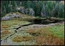 Beaver Pond and forest. Voyageurs National Park ( color)
