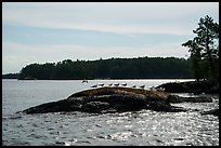 Seagulls perched on rock, Namakan Lake. Voyageurs National Park ( color)