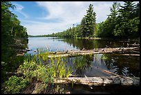 Fallen trees and Beast Lake. Voyageurs National Park ( color)