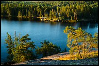 Granite rocks and trees above Anderson Bay. Voyageurs National Park ( color)