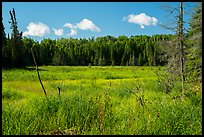 Marshy area. Voyageurs National Park ( color)