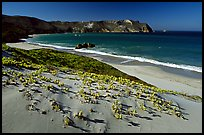 Sand dunes and Cuyler Harbor, afternoon, San Miguel Island. Channel Islands National Park, California, USA.