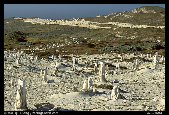 Ghost forest formed by caliche sand castings of plant roots and trunks, San Miguel Island. Channel Islands National Park, California, USA.
