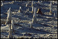 Petrified stumps of caliche, San Miguel Island. Channel Islands National Park, California, USA. (color)