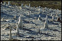 Caliche forest of petrified sand castings, San Miguel Island. Channel Islands National Park, California, USA. (color)