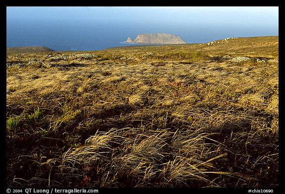 Grasses and Prince Island, San Miguel Island. Channel Islands National Park (color)