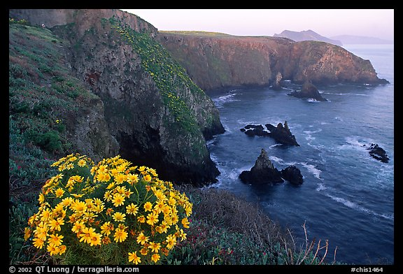 Coreopsis and Cathedral Cove, Anacapa. Channel Islands National Park (color)