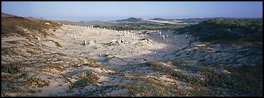 Sandy basin with petrified stumps, San Miguel Island. Channel Islands National Park (Panoramic color)