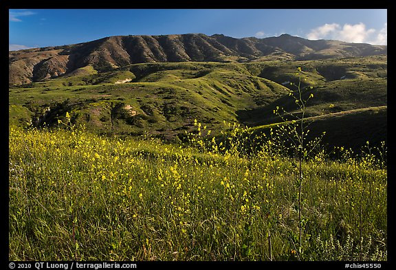 Mustard in bloom and interior hills, Santa Cruz Island. Channel Islands National Park (color)