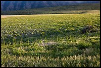 Meadow in spring, Santa Cruz Island. Channel Islands National Park, California, USA.