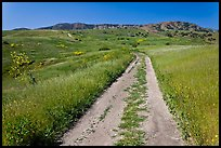Smugglers Road through green hills in the spring, Santa Cruz Island. Channel Islands National Park, California, USA.