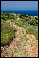 Winding dirt road and ocean, Santa Cruz Island. Channel Islands National Park ( color)