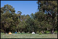 Campground in Scorpion Canyon, Santa Cruz Island. Channel Islands National Park ( color)