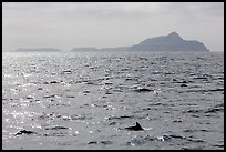 Dolphin fin and Anacapa Islands in background. Channel Islands National Park, California, USA.