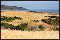 Golden grasses and Bechers Bay, Santa Rosa Island. Channel Islands National Park ( color)