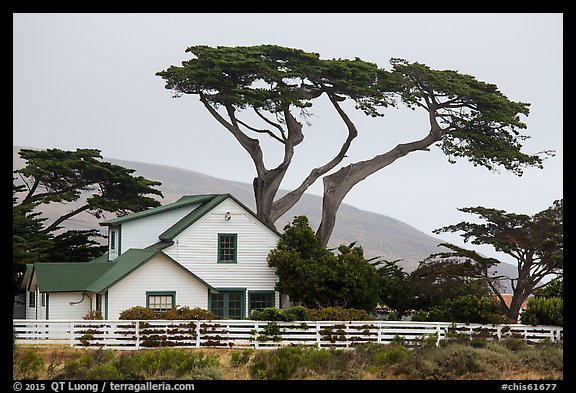 Historic Vail and Vickers main ranch house with cypress trees, Santa Rosa Island. Channel Islands National Park (color)