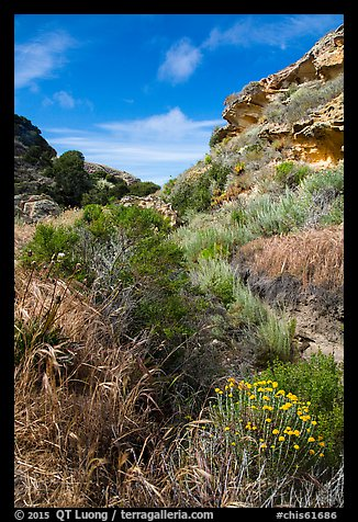 Flowers and rock formations, Lobo Canyon, Santa Rosa Island. Channel Islands National Park (color)