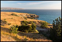 Torrey Pines and coastline near Black Point, Santa Rosa Island. Channel Islands National Park ( color)