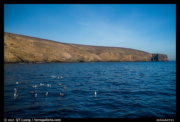 Seabirds and Arch Point, Santa Barbara Island. Channel Islands National Park (color)