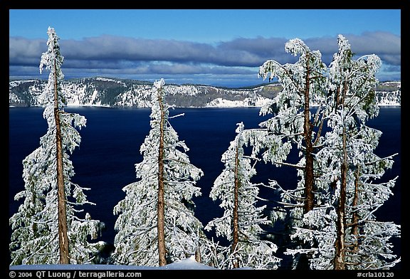 Trees with hoar frost above  Lake. Crater Lake National Park, Oregon, USA.
