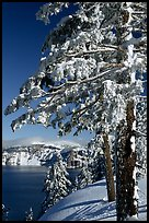Trees framing  lake in winter. Crater Lake National Park ( color)