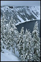 Trees and Lake rim in winter. Crater Lake National Park ( color)