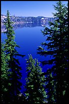 Trees and Lake. Crater Lake National Park ( color)