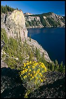 Sage flower and cliff. Crater Lake National Park ( color)