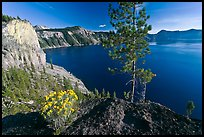 Flowers, cliff, and lake. Crater Lake National Park ( color)